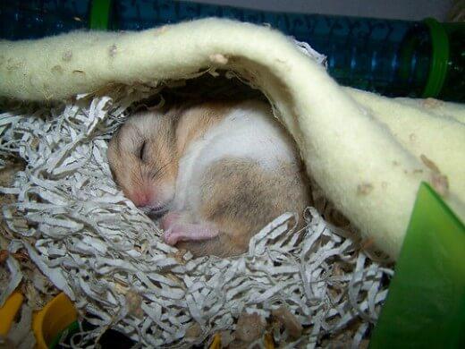 perte de poids chez les hamsters nains comment arrêter la perte de poids avec le vih