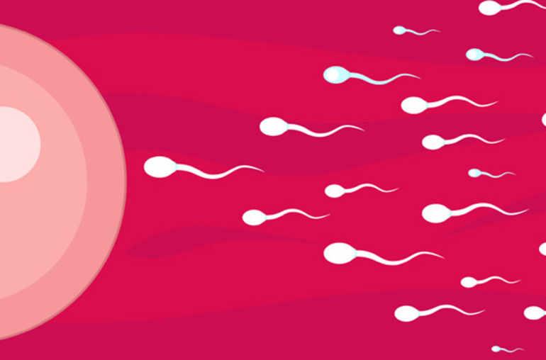 Comment accroitre la motilité des spermatozoïdes