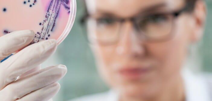 Une bactérie qui fait maigrir