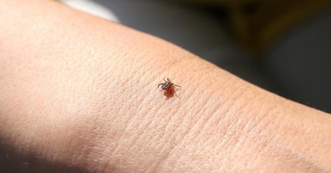 Quand la maladie de Lyme touche le cœur - Planete sante