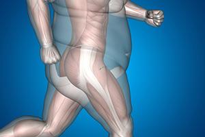 le corps humain peut-il perdre des cellules graisseuses