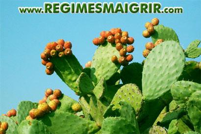 perte de poids premium cactus perte de poids wfpb