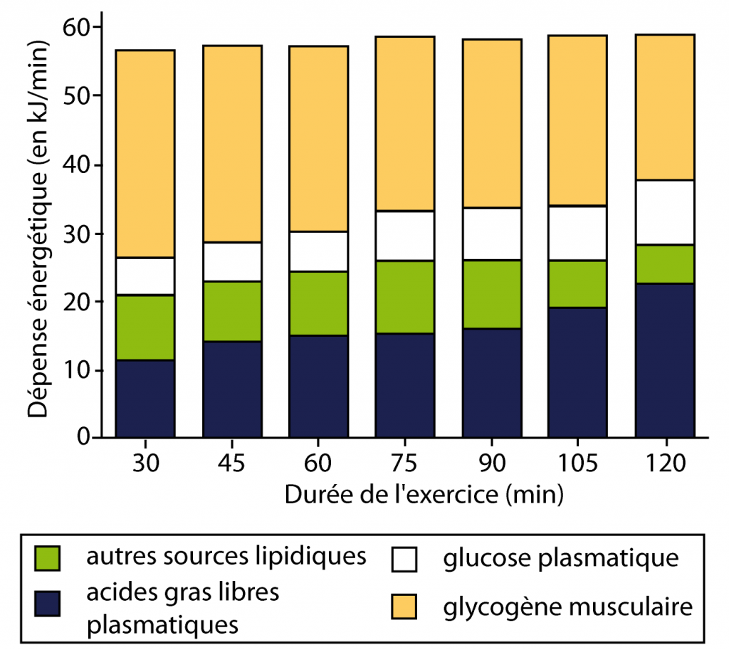 brûler les graisses plutôt que le glycogène
