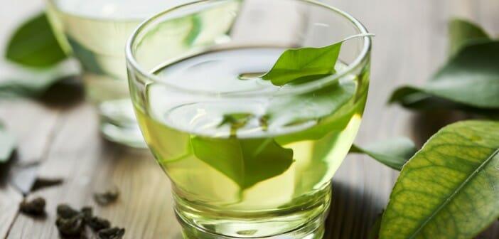 Le thé à la menthe aide-t-il à perdre du poids comment perdre du poids en tant que lutteur