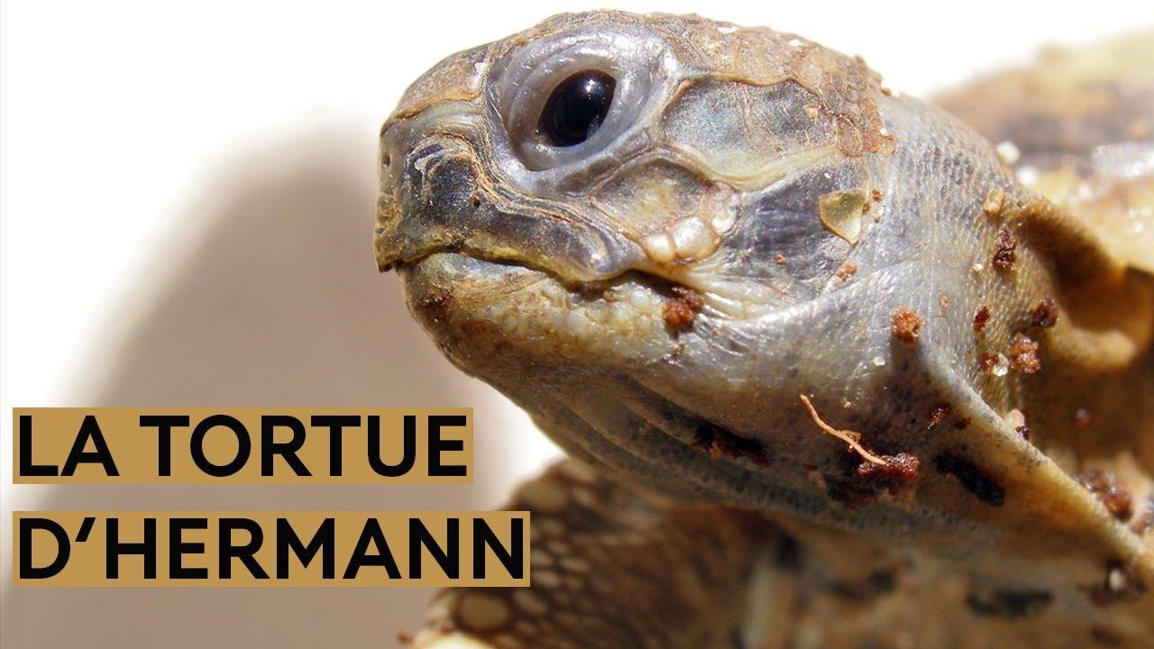 comment faire perdre du poids à ma tortue sauter des repas peut-il vous faire perdre du poids