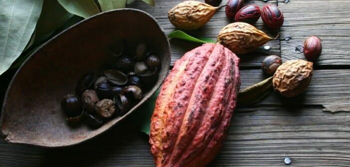 Comment consommer les fèves de cacao pour maigrir ? - Le blog gustavo-moncayo.fr