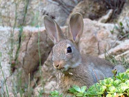 les lapins perdent-ils du poids en été