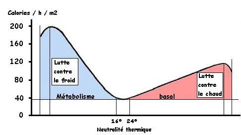 perte de poids taux métabolique basal