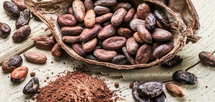 le cacao brûle-t-il les graisses