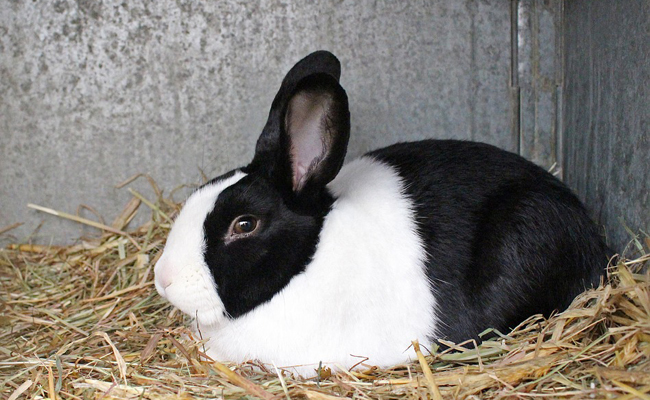 Ma lapine est trop grosse, comment la faire maigrir ? - Forum Lapin - Lapin - Wamiz