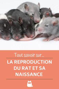Comment se débarrasser des souris et des rats | CAA-Québec