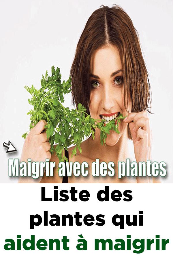 herbes pour vous aider à perdre la graisse du ventre