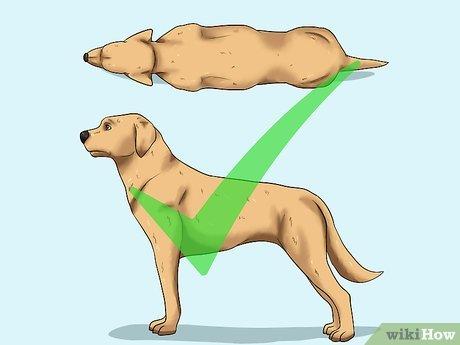 Comment aider un chien à perdre du poids ? Nos conseils | Purina