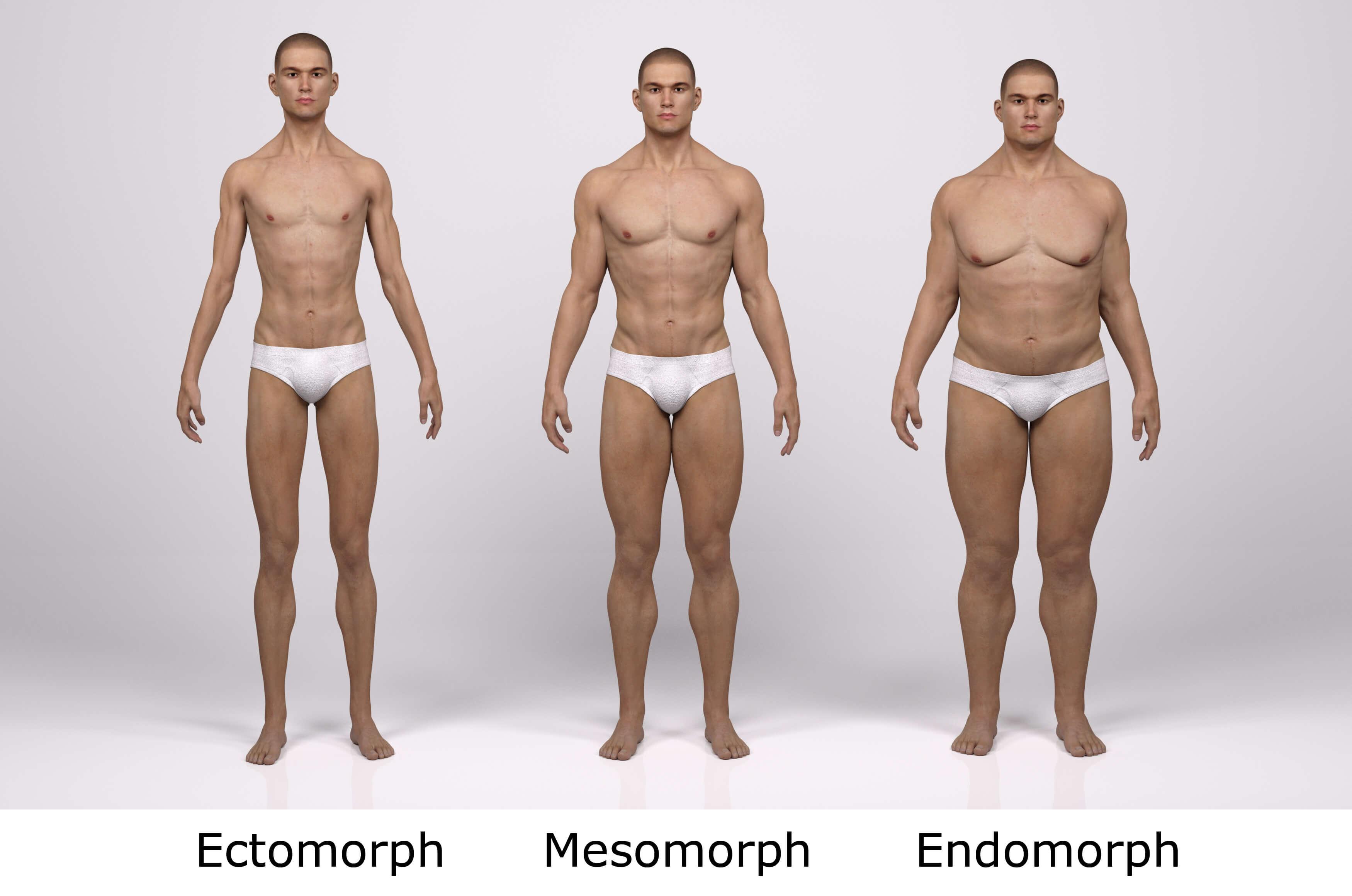 perte de graisse pour le mâle endomorphe