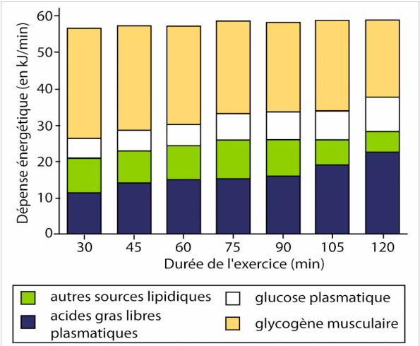 Lipoxmax : quelle intensité d'exercice pour maximiser la perte de poids?