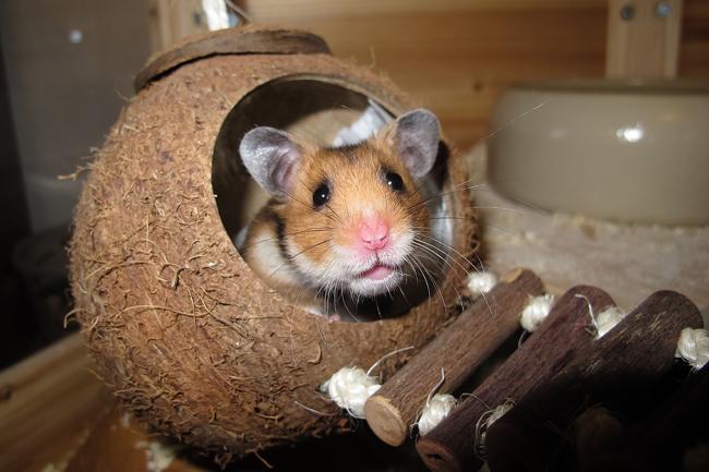 perte de poids chez les hamsters nains pouvez-vous perdre du poids après une novasure