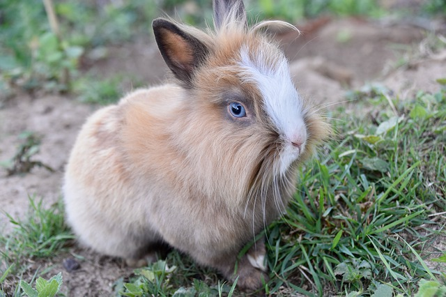 perte de poids de lapin domestique body by vi perte de poids