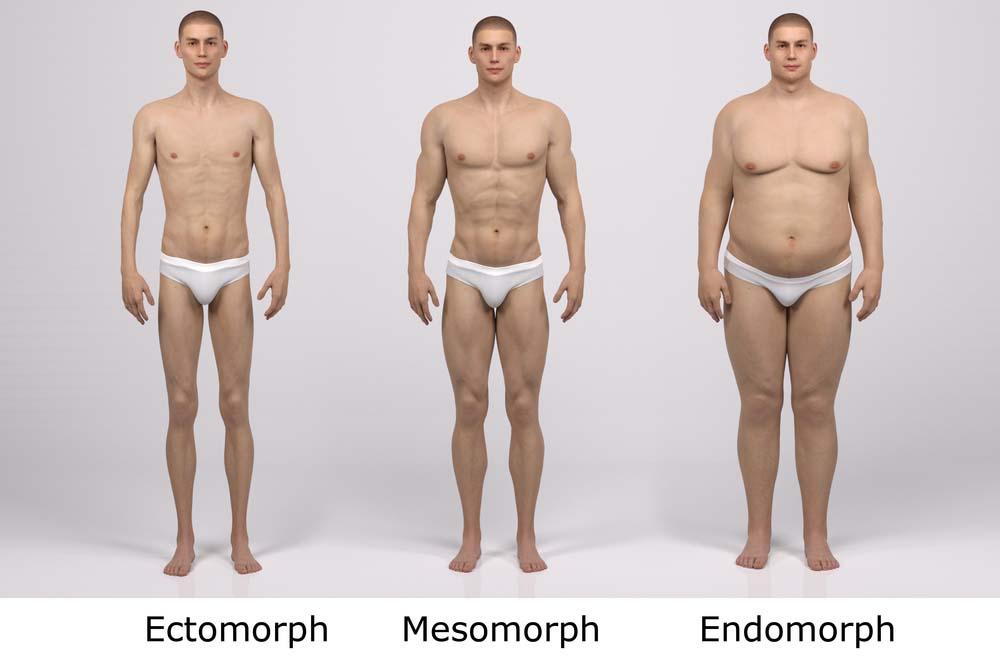 types de corps masculins et perte de poids