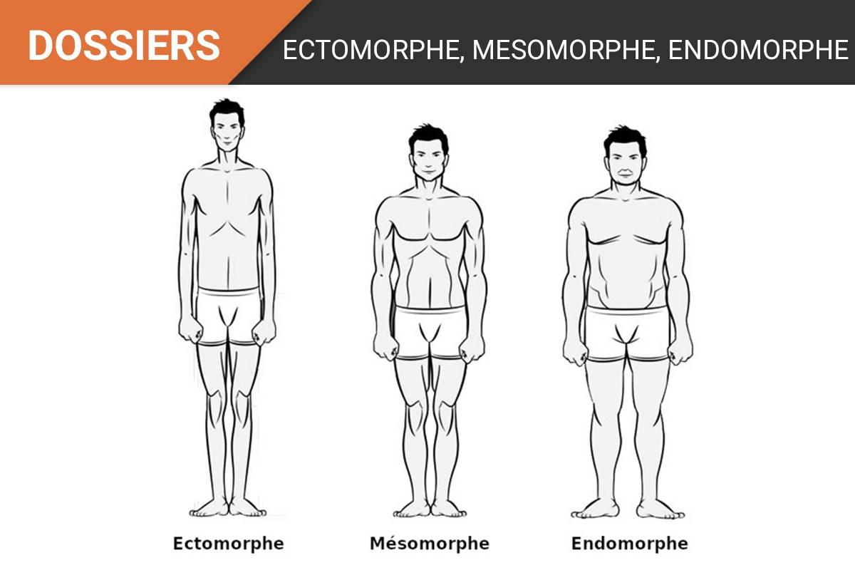Perdre du poids mésomorphe mâle, l'endomorphe...