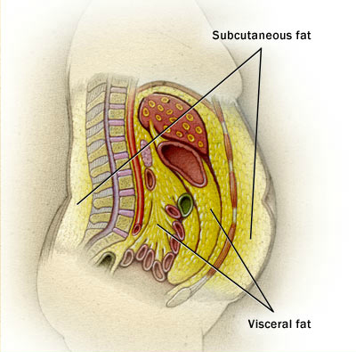 perte de graisse corporelle un mois