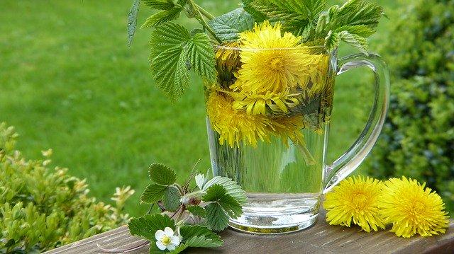 Les bienfaits du pissenlit contre la rétention d'eau | Mon Régime Minceur